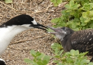 Mother feeding the chick