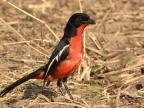 Birds – (2nd trip)