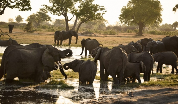 invites Elephants to gather…