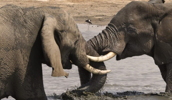 playing in a small waterhole