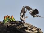 Birds (106 species)