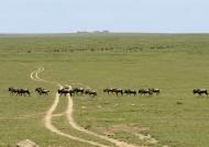 Crossing the Ndutu Plains