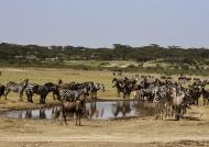 Animals around a waterhole…