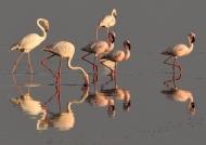 Birds at sunrise-5 sp.