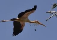 Y-b Stork & nesting material