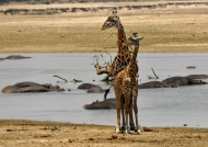 to South Luangwa