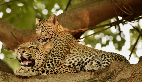 with her 6 months cub