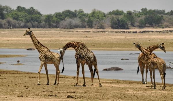 near the Mara River and…