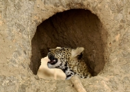 in a hole of a baobab trunk…