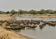 Luangwa River – overview…