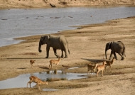 water from the Luangwa River