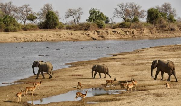 Elephants & Pukus drinking…