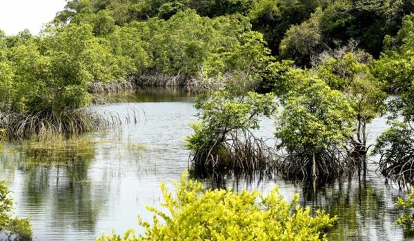 Louri area (Loango NP)