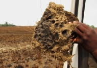 Larvae found inside