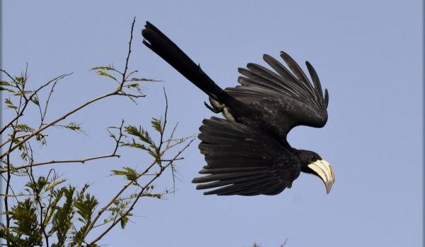 Birds (33 species)