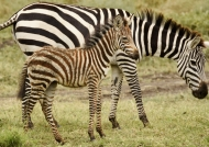 Foal with Mom