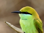 India birds – 2