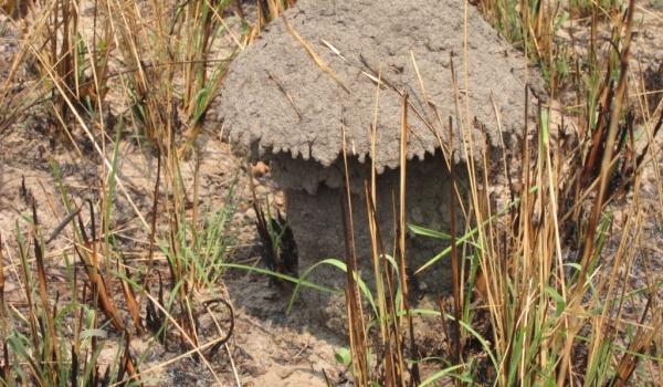….mushroom-shaped housing