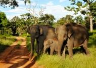 Elephant couple with baby
