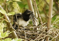 wishing to leave the nest…