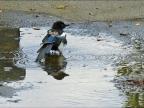 Chick first baths