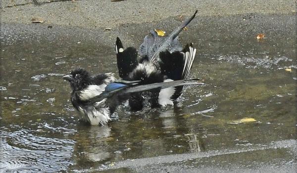 Enjoying the bath