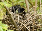 «Discussion» in the nest