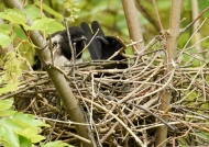 « Discussion » in the nest