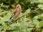 Marquenterre – Birds