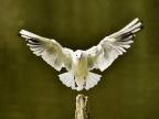 Île-de-France – Birds