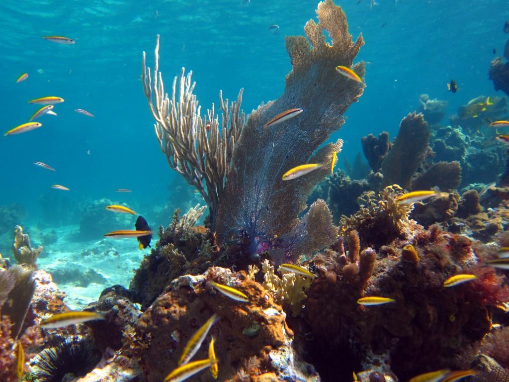 Lobster Underwater Jamaica - Underwater